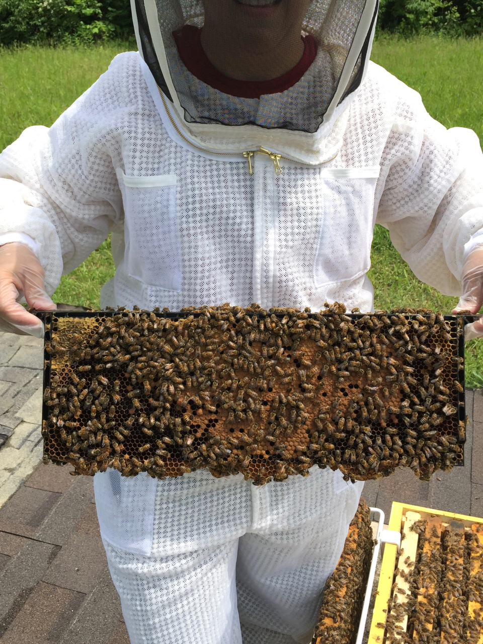 Uncategorized Our Bee Log Beehive Phone Wiring Diagram And This Is Anita Holding One Of The Frames In Yellow Hive Chock Full Bees Good Pattern Brood Pollen Honey Etc